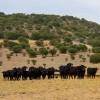 photo Soutenez les vaches le 15 mars 2012 au Trocadéro