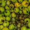 photo Fruits de la cueillette et cidre