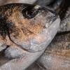 photo Saisonnalité du poisson