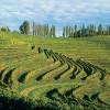 photo Bref regard sur les vins slovènes