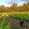 photo Salon Nature et Vins, gros plan sur le domaine de la Guicharde