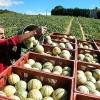 photo Le melon a tout bon !