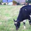 photo Trouver une ferme près de chez vous pour faire vos courses