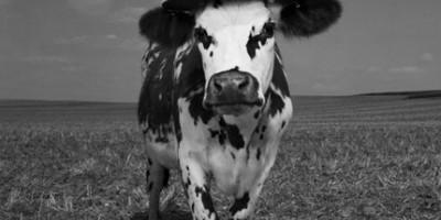 photo Exposition Oh la Vache ! à la Milk Factory