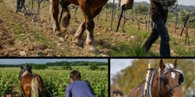 photo Billet d'humeur par Daniel-Etienne Defaix, vigneron à Chablis