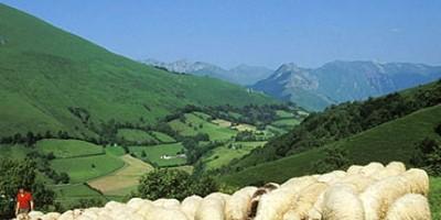 photo IGP pour protéger l'Agneau de lait des Pyrénées (Indication Géographique Protégée)