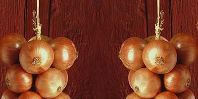 photo L'Oignon de Roscoff obtient l'Appellation d'Origine Protégée (AOP)