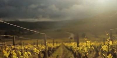 photo Pourquoi il faut regarder le documentaire Vino Business