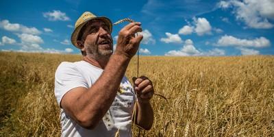 photo Philippe Guichard, le magicien des blés anciens devenu meunier
