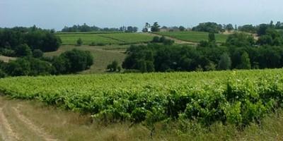 photo Domaine Le Bouscas – La Dulcinée 2003