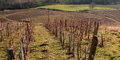 photo Domaine des Côtes de la Molière Beaujolais Villages 2009