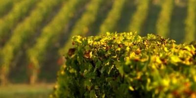 photo Un pavillon du Vin au Salon de L'agriculture